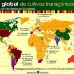 GreenPeace y LOS TRANSGÉNICOS